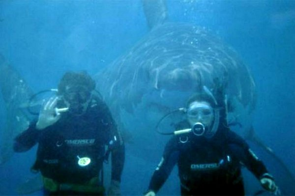 scared divers