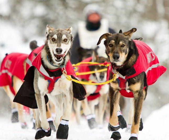 Sled dog race in Minnesota.
