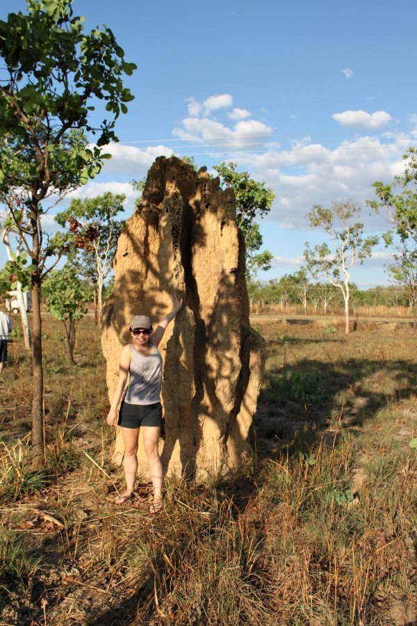 Some of the termite mounds were twice the size of us