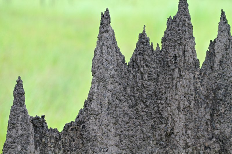 A close-up of a magnetic termite mound