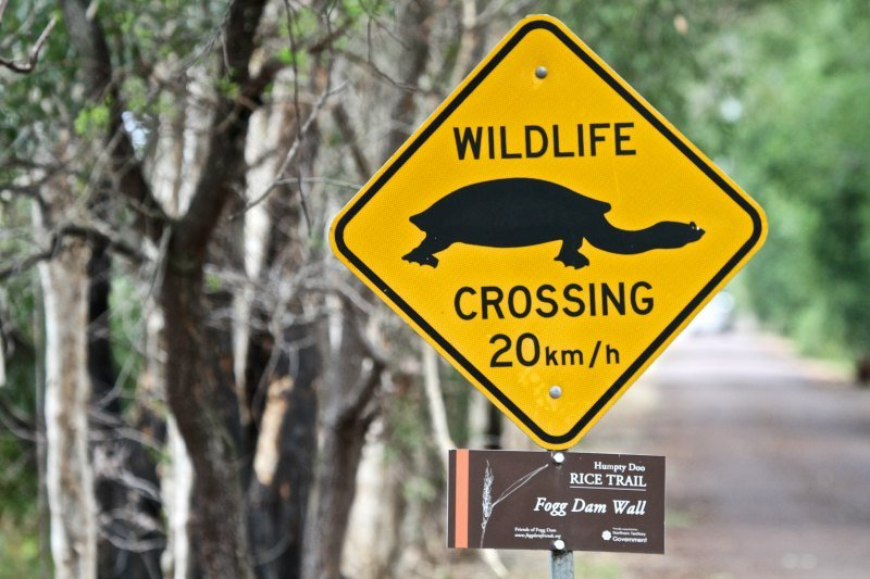 Watch Out For Turtles