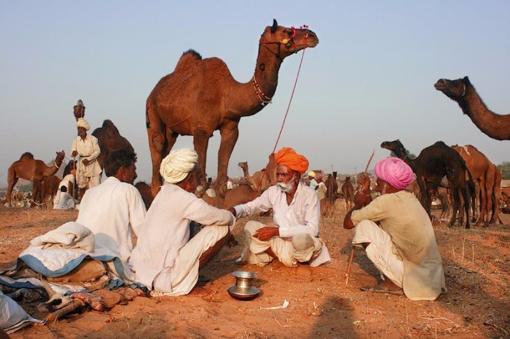 A group of men sitting around at the Pushkar Mela
