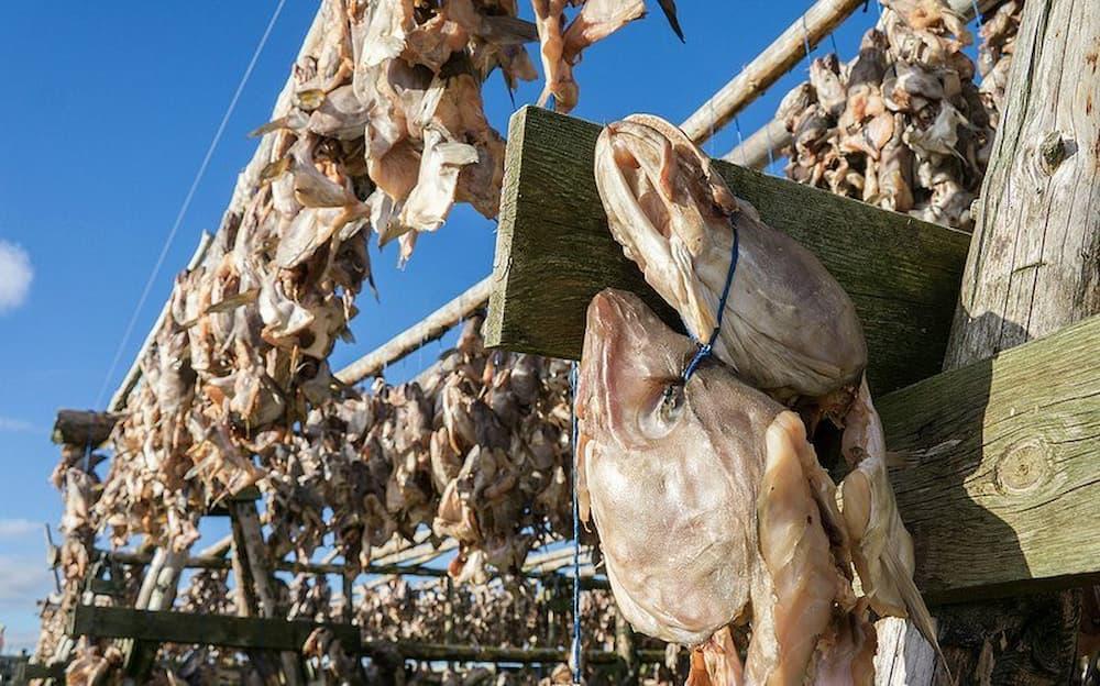 Fish head drying in the sun