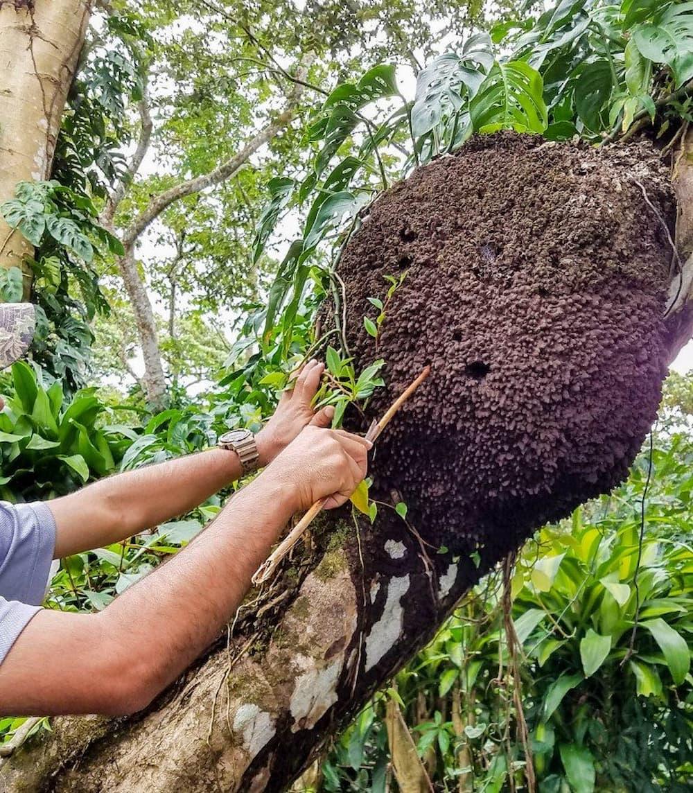 Termite hunting