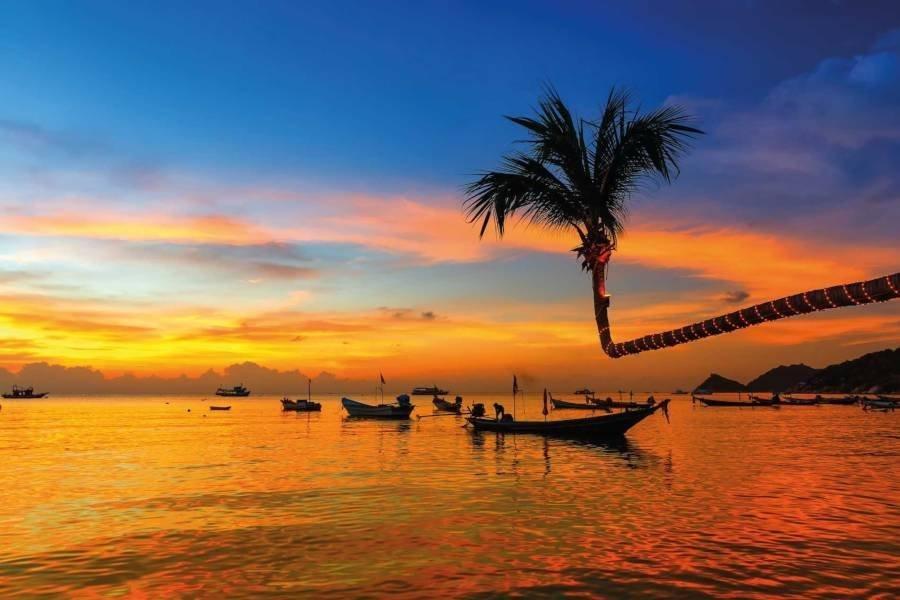 Kho_Tao__Palm_Tree_Sunset_