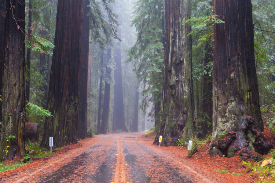 redwood_national_park