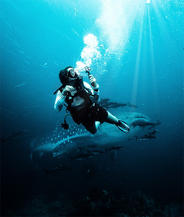 Diving with whales sharks